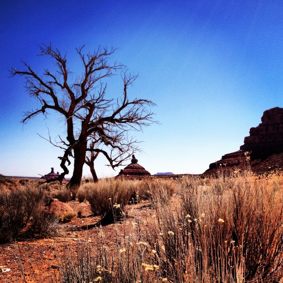 Cottonwood Tree,  Battleship Rock & Rooster Butte, Valley of the Gods