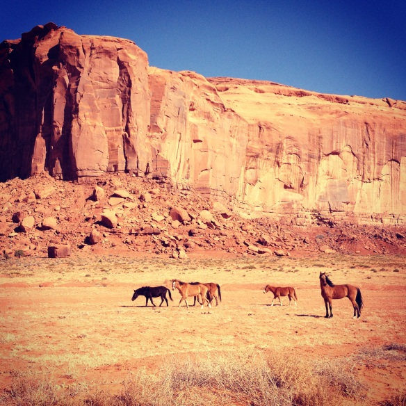 Wild horses - I love that the stallion just stood there & posed for the picture. :-)